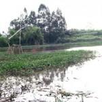 Tin tức trong ngày - HN: Đóng bè chuối kéo quan tài trên sông