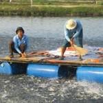 Thị trường - Tiêu dùng - Hàng loạt nhà máy cá tra sắp đóng cửa