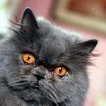 Tin tức trong ngày - Iran sẽ đưa mèo lên vũ trụ