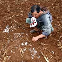 Quảng Trị: Hàng chục con dê mất tích, nghi báo hoa mai ăn thịt - 3