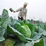 Thị trường - Tiêu dùng - Giá rau củ tăng vọt: Nông dân chưa được lợi
