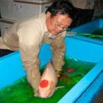 Thị trường - Tiêu dùng - Rộng đường xuất khẩu cá cảnh