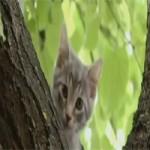 Video Clip Cười - Video clip hài: Chỉ vì con mèo
