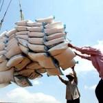 Thị trường - Tiêu dùng - Giảm chỉ tiêu xuất khẩu gạo năm 2013