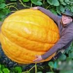 Phi thường - kỳ quặc - Quả bí ngô khổng lồ nặng 320kg