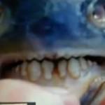 """Phi thường - kỳ quặc - Bắt được cá cắn """"của quý"""""""