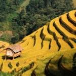 Du lịch - Mù Cang Chải: Danh thắng Quốc gia Ruộng bậc thang