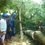 Tin tức trong ngày - Cắt điện toàn tỉnh Quảng Bình, Quảng Trị do bão