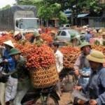 Thị trường - Tiêu dùng - Vải thiều xuất đi Trung Quốc rẻ hơn bán vào Nam