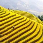 Du lịch - 10 thắng cảnh du lịch hấp dẫn nhất Việt Nam