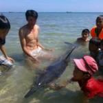 Tin tức trong ngày - TT- Huế: Cá heo còn sống trôi dạt vào bờ