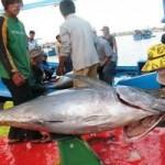Thị trường - Tiêu dùng - Tìm lối ra cho cá ngừ đại dương