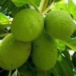 Thị trường - Tiêu dùng - Lá, quả cây cứu đói châu Phi giá 300.000 đồng/kg ở HN