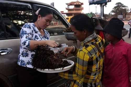 Rùng rợn đặc sản nhện đen chiên Campuchia - 3