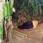 An ninh Xã hội - Rúng động: Nghịch tử dùng búa đánh chết mẹ và bà ngoại
