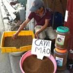 Thị trường - Tiêu dùng - 'Phố' bán sâu rồng nuôi chim