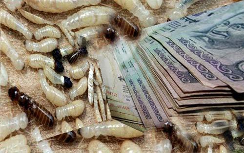 Kinh hoàng với những cuộc đổ bộ của côn trùng - 1