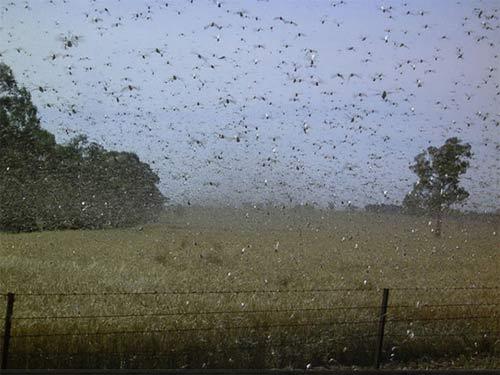Kinh hoàng với những cuộc đổ bộ của côn trùng - 3