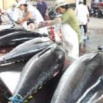 Thị trường - Tiêu dùng - Xuất khẩu cá ngừ giảm mạnh