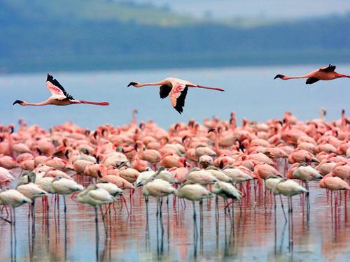 Khám phá thiên đường hoang dã Kenya - 7