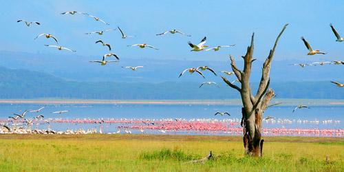 Khám phá thiên đường hoang dã Kenya - 6