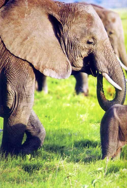 Khám phá thiên đường hoang dã Kenya - 3
