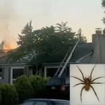 Phi thường - kỳ quặc - Giết một con nhện mất 1,2 tỷ đồng