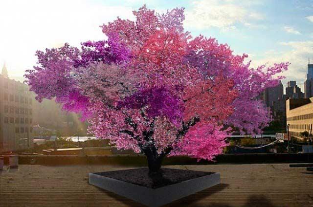 Kỳ diệu loài cây cho ra 40 thứ quả - 1