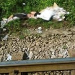 Tin tức trong ngày - Một phụ nữ lao đầu vào đoàn tàu tự tử