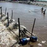 Thị trường - Tiêu dùng - Hơn 24.000ha nuôi tôm mất trắng vì dịch bệnh