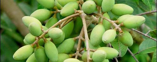 Những trái cây, hạt rừng hút khách thủ đô - 10