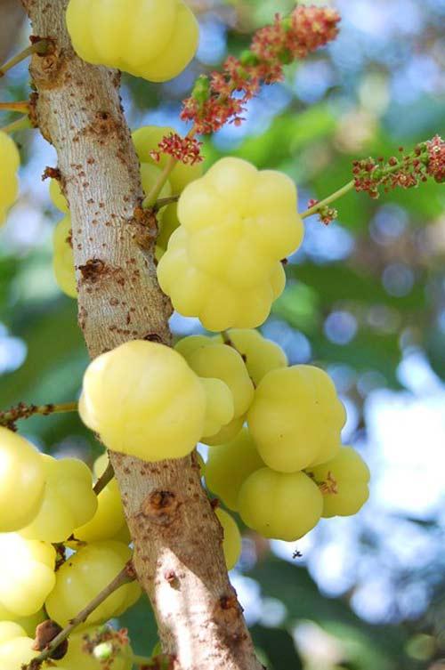 Những trái cây, hạt rừng hút khách thủ đô - 11