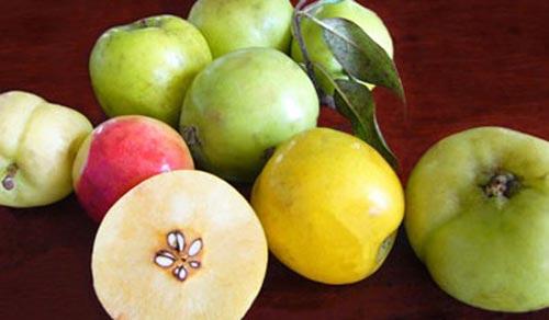 Những trái cây, hạt rừng hút khách thủ đô - 8