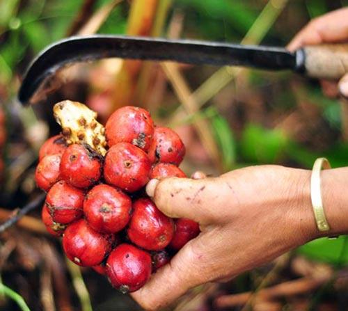 Những trái cây, hạt rừng hút khách thủ đô - 9
