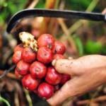 Thị trường - Tiêu dùng - Những trái cây, hạt rừng hút khách thủ đô