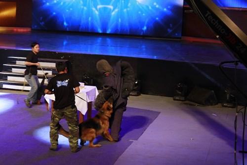 """Mỹ nam """"Con bướm xuân"""" bị chó rượt cắn trên sân khấu - 2"""