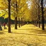 """Phim - Đẹp tuyệt rừng cây trên """"thánh địa"""" phim trường Hàn Quốc"""