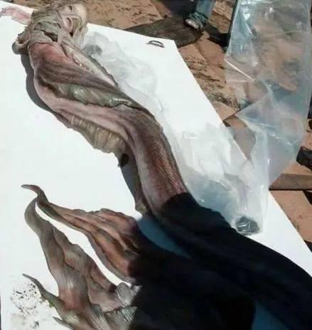 """Xôn xao """"xác nàng tiên cá"""" tìm thấy trên bãi biển - 2"""