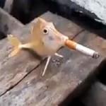 Phi thường - kỳ quặc - Video: Chú cá đáng thương bị ép hút thuốc lá
