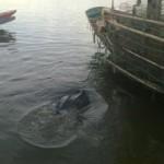 Tin tức trong ngày - Rùa biển quý hiếm mắc lưới ngư dân Quảng Bình