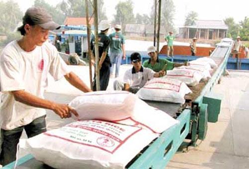 Gạo Việt sẽ thống lĩnh thị trường trong nhiều tháng tới? - 1