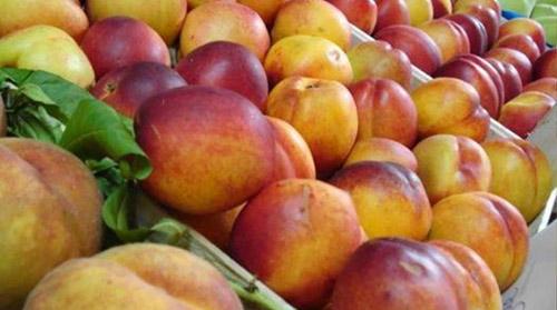 """Nga: Thực phẩm nhập khẩu bất ngờ """"nhiễm độc"""" hàng loạt - 1"""