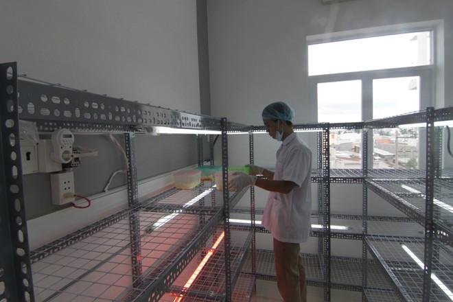 9x và công ty đông trùng hạ thảo giá 100 triệu/kg - 10