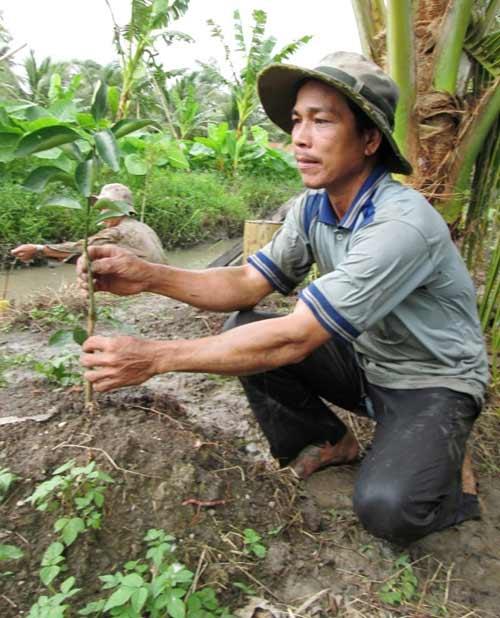Sau thu nhập tiền tỷ, nông dân phải đốn bỏ cam sành - 7