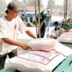 Thị trường - Tiêu dùng - Gạo Việt sẽ thống lĩnh thị trường trong nhiều tháng tới?