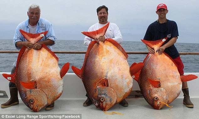 Bắt được 3 con cá cực hiếm trong 1 ngày - 1