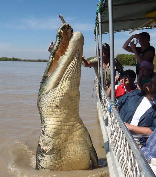 Cá sấu khổng lồ tử chiến để trả thù cá mập - 2