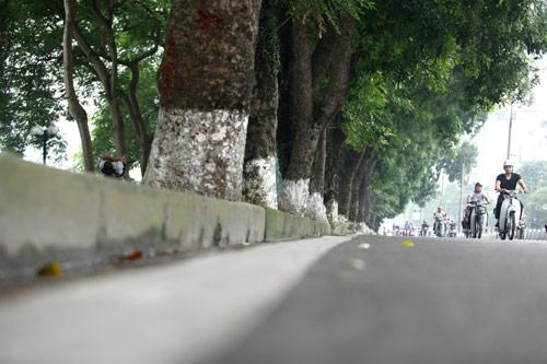 Người HN ngỡ ngàng vì hàng cây cổ thụ sắp bị chặt hạ - 7