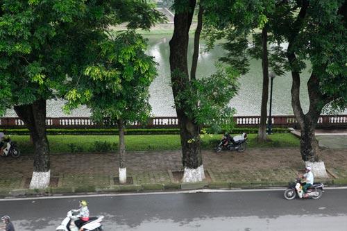 Người HN ngỡ ngàng vì hàng cây cổ thụ sắp bị chặt hạ - 6
