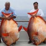 Phi thường - kỳ quặc - Bắt được 3 con cá cực hiếm trong 1 ngày